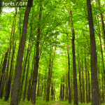 grisbee_images_placements_foret